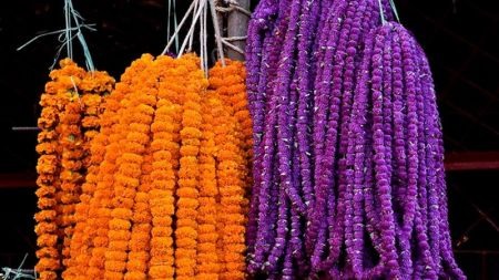 Production of Flowers for Tihar Decline this Year