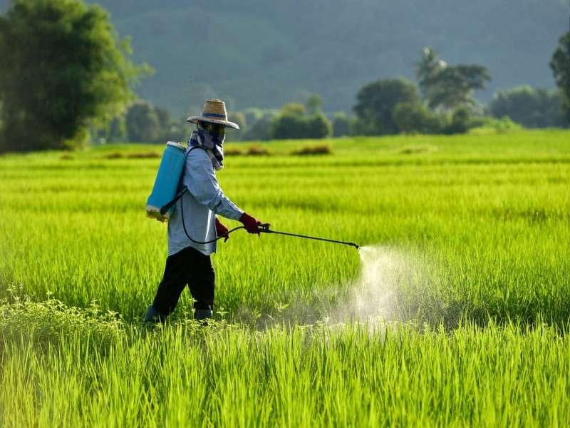 Unauthorized Pesticide Users to be Fined